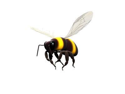 bee-one.jpg